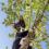Covid-19: de kat uit de boom kijken of juist investeren?